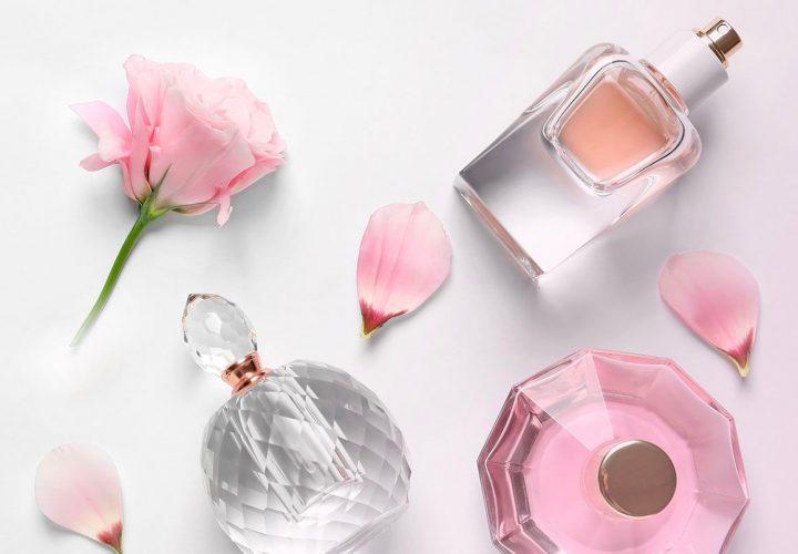 Webmaster Site Les Parfums de Grasse
